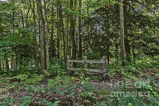 Wooden Barrier in the Woods by Sue Smith