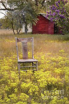 Wooden Chair in Wildflowers by Jill Battaglia