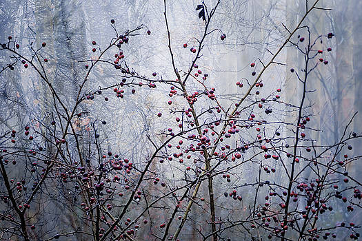 Woodland Berries by Glenys Garnett