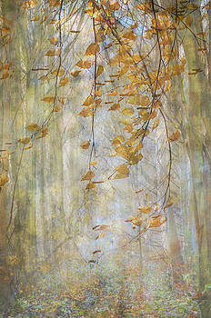 Woodland Birch Leaves by Glenys Garnett