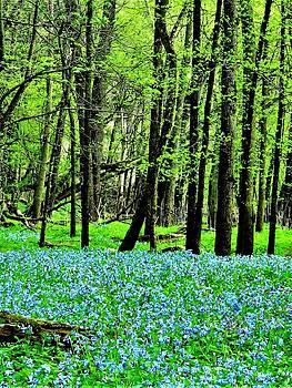 Woodland Bluebells  by Lori Frisch