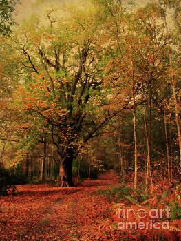 Woodland Path, Sandringham  by John Edwards