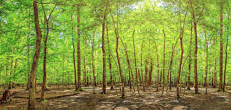 John M Bailey - Woodlands Expanse