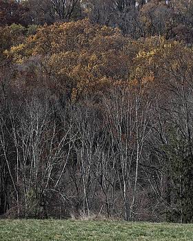 Woods by Paul Ross