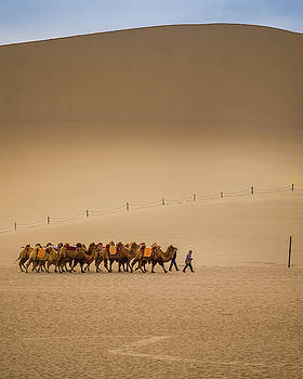 Working Camels Dunhuang Gansu China by Adam Rainoff