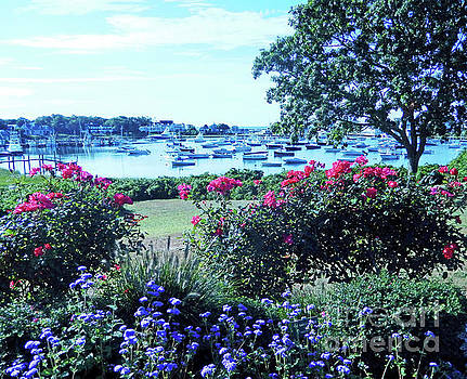Sharon Williams Eng - Wychmere Harbor Blooms 300