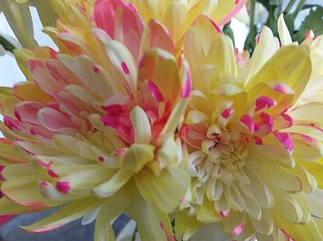 Yellow  and Pink flowers by Ronni Dewey