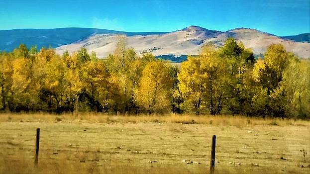 Yellow Autumn Leaves on Trees in Wyoming by Peggy Leyva Conley