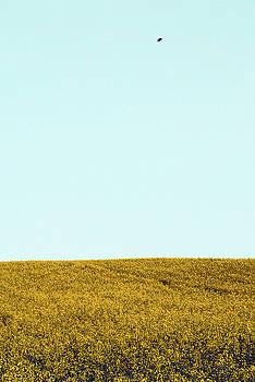 Yellow Bee by Jennifer Orhelys