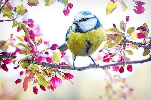 Yellow blue bird with flowers by Top Wallpapers