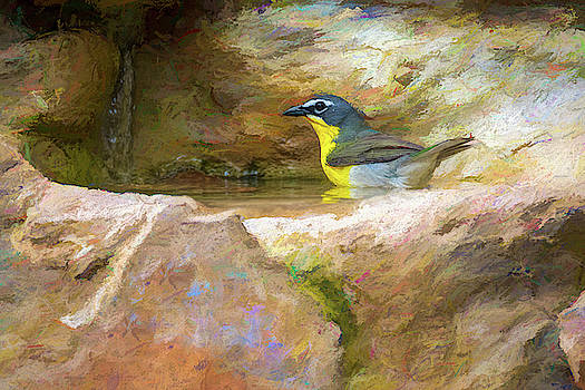 Yellow Breasted Chat Bath Time Painterly  by Debra Martz