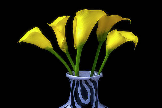 Yellow Calla Lillies In Striped Vase by Garry Gay