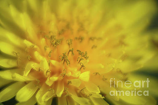 Yellow curls by Claudia M Photography