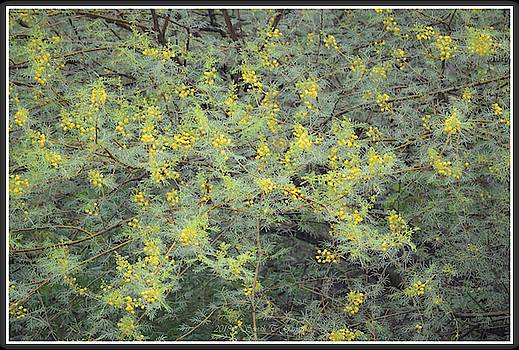 Yellow florescence amidst green by Sonali Gangane