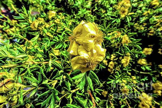 Yellow Flower by Joe Lach