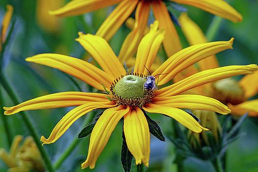 Yellow Flower by Susan Rydberg
