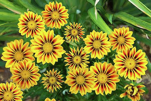 Yellow Flowers by Judi Saunders