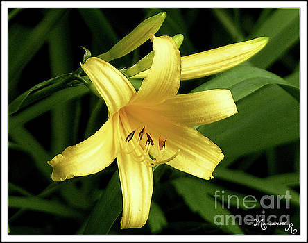 Yellow Lily by Mariarosa Rockefeller