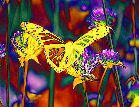 Yellow Monarch Butterfly by Tom Kelly
