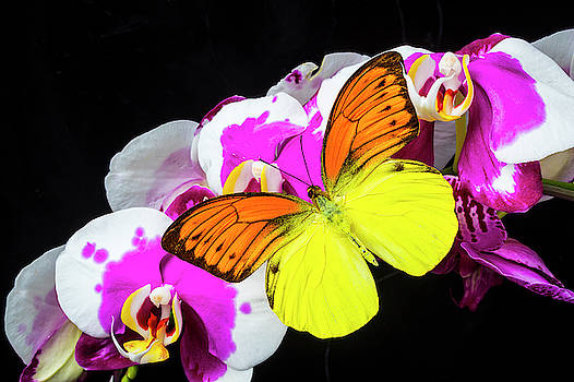 Yellow Orange Butterfly On Orchids by Garry Gay