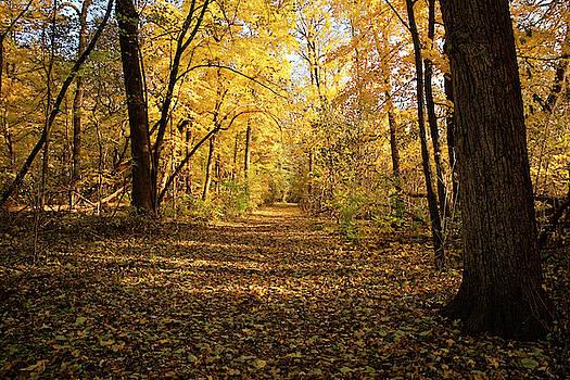 Yellow Pathway by Peter Ponzio
