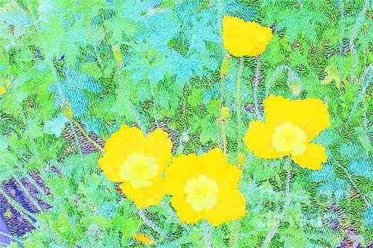 Yellow Poppies by Katherine Erickson