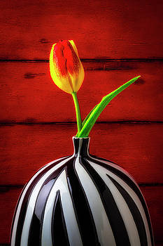 Yellow Red Tulip In Striped Vase by Garry Gay