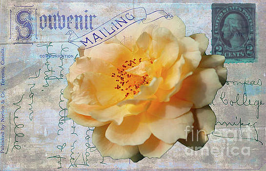 Yellow Rose on Vintage Souvenir Post Card by Nina Silver