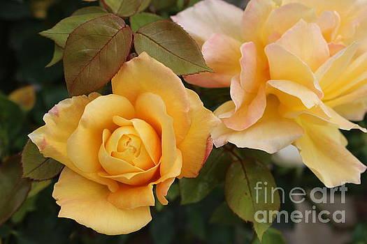 Yellow Roses by Katherine Erickson