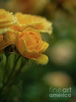 Yellow Roses Raindrops Necklace by Mike Reid