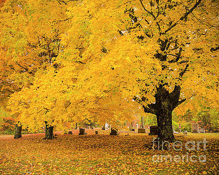 Yellow Show by Alana Ranney