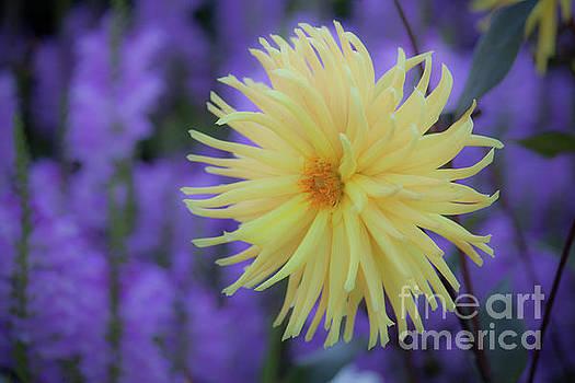 Yellow Sunburst by Kristi Cromwell