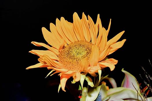 Yellow Sunflower Small by Mark J Dunn