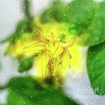 Yellow tomato blossom on a tomato bush j3 by Humorous Quotes