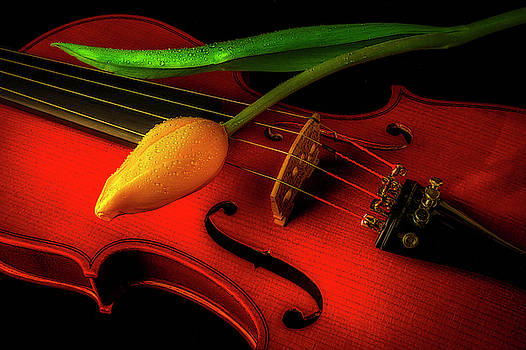 Yellow Tulip And Violin Romance by Garry Gay