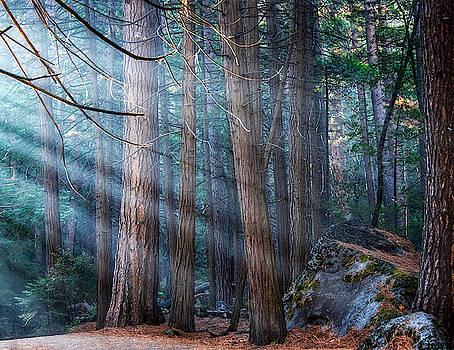 Yosemite Sunbeams Ii by Rand