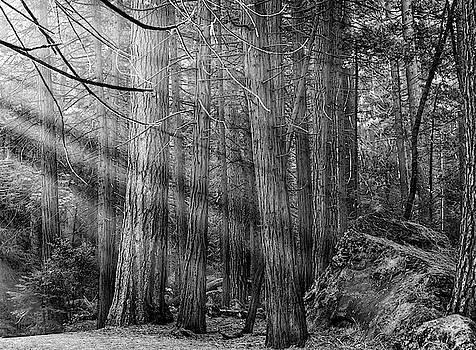 Yosemite Sunbeams by Rand