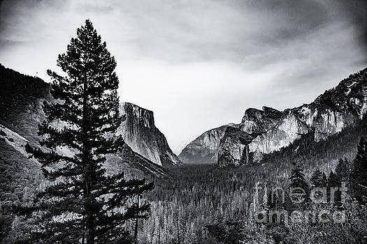 Lisa Lemmons-Powers - Yosemite Tunnel View Black and White