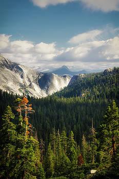 RicardMN Photography - Yosemite Valley forest