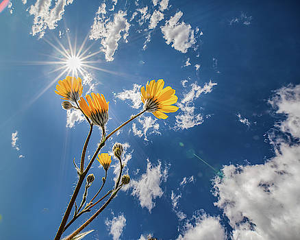 You Are My Sunshine by Peter Tellone
