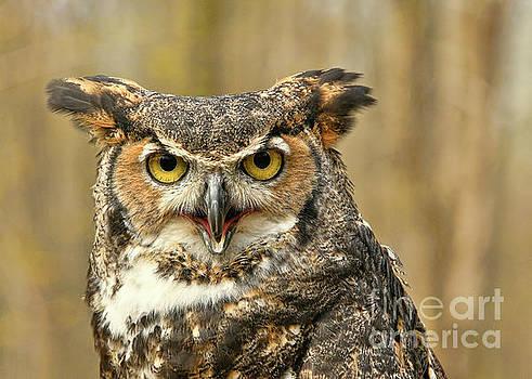 You Looking at Me? by Diane LaPreta