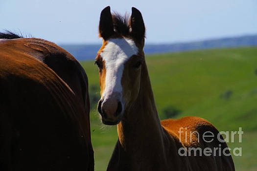 Youg colt close to its mother by Jeff Swan