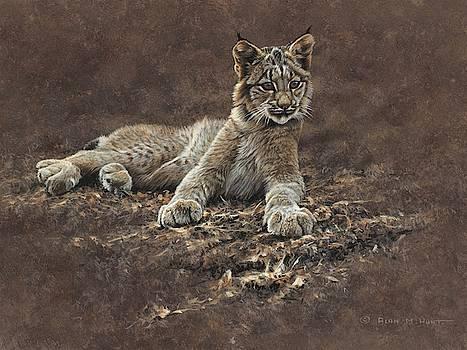 Young Bobcat by Alan M Hunt by Alan M Hunt