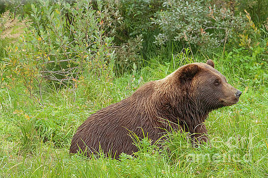 Young Grizzly by Bernita Boyse