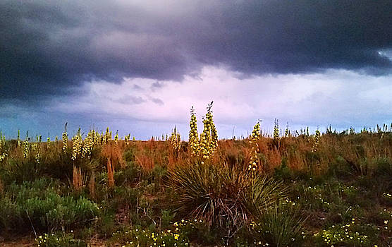Yucca Plants by Ally White
