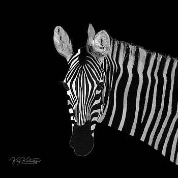 Zebra Portrait by Kay Kochenderfer
