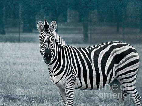 Zebra Standing Alone by Ella Kaye Dickey