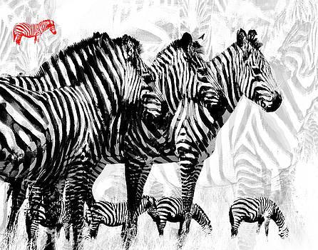 Zebra Stripes by Jeanne Gadol