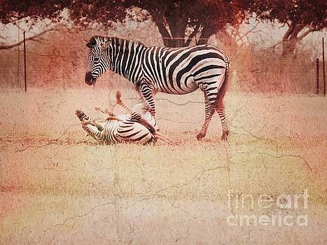 Zebras by Ella Kaye Dickey