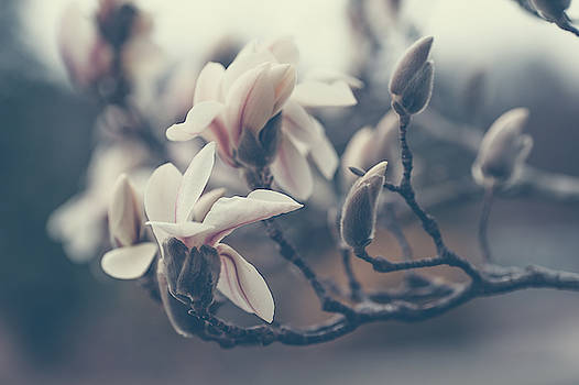 Jenny Rainbow - Zen Magnolia Blossom Boho Style